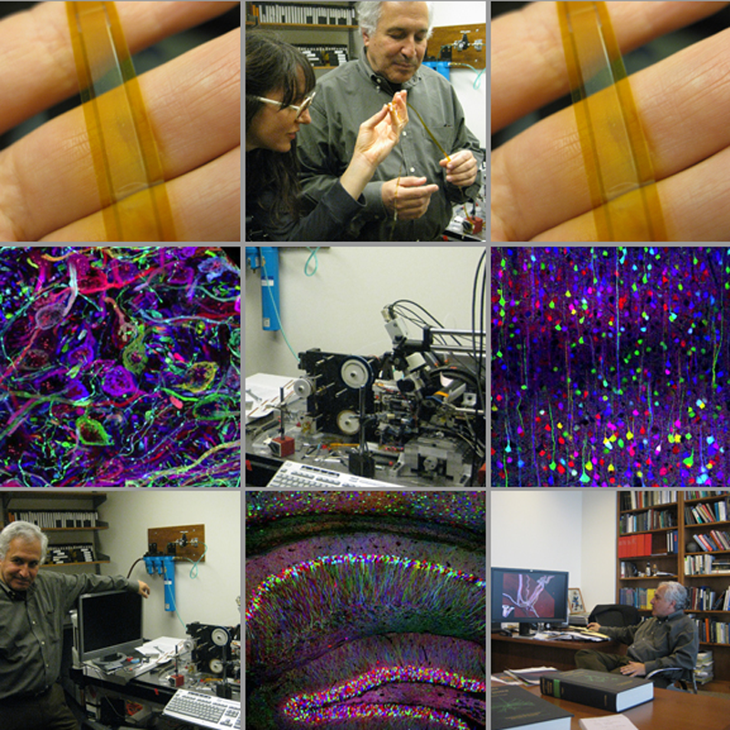 Inspections of a Mouse Brain and the Brainbow