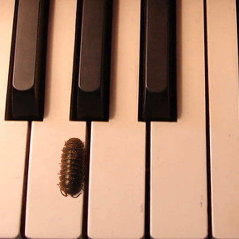 Pianissimo is a player piano for roly-polies.